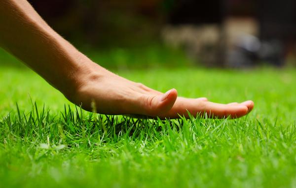 Lawn Preparation