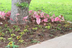 flower bed maintenance